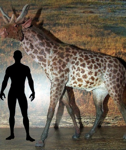 Diamond PITTURA KIT Ritratto del leopardo AZ-1400