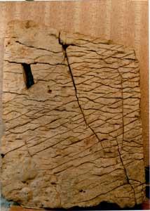 I fossili for Creatore della mappa della casa
