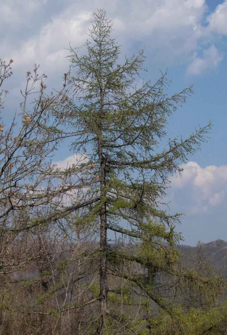 come riconoscere gli alberi da lontano