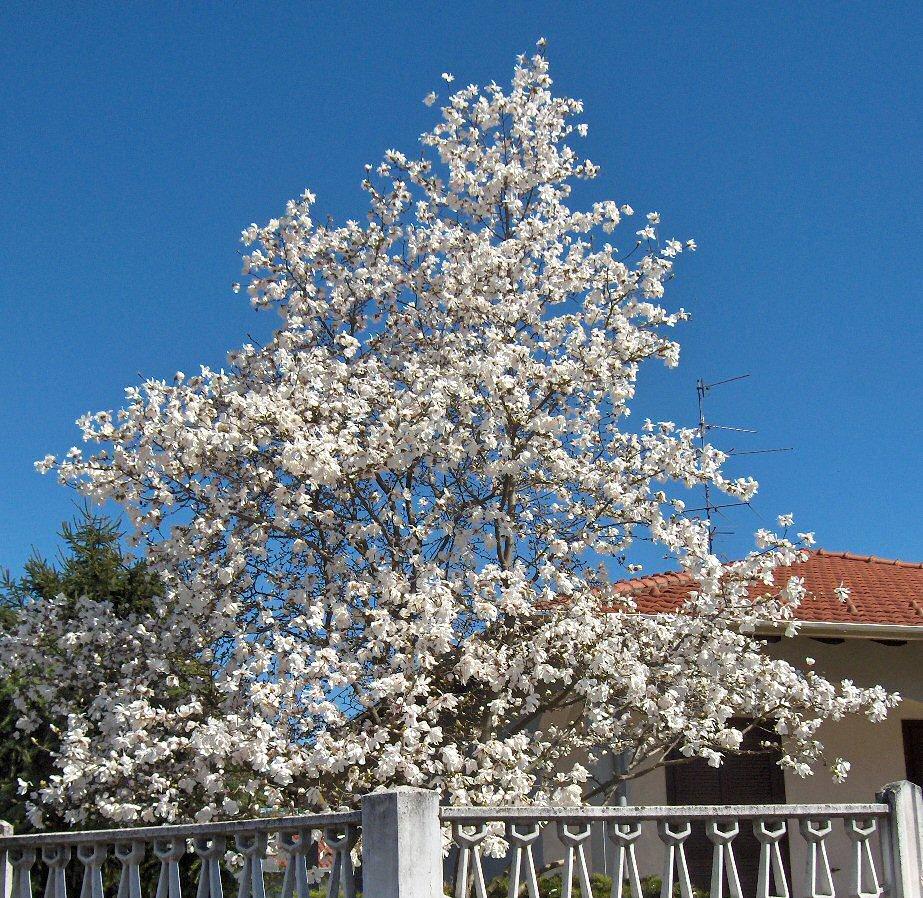Fiori su pensieri sparsi for Albero con fiori blu